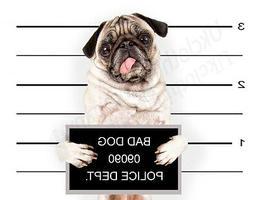 FUNNY MUG SHOT PUG DOG T-SHIRT-MENS WOMENS KIDS TOPS S M L X