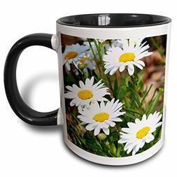 "3dRose mug_56294_4"" Pretty White Daisies - Flowers - Floral"